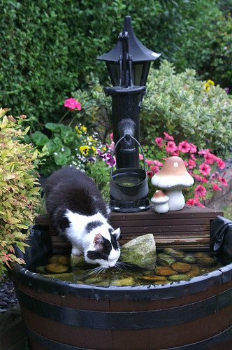 Alfie, at his favourite watering hole