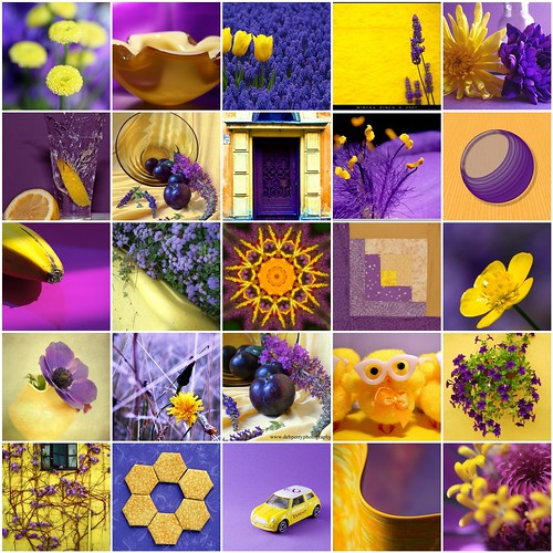 Contrasting Colors - Yellow & Purple