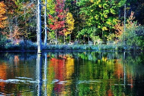 autumn newyork fall reflections pond cornell fingerlakes sapsuckerwoods