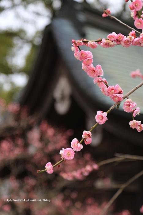 20140301_Fukuoka_0887 f