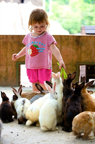 The little girl feeds rabbits