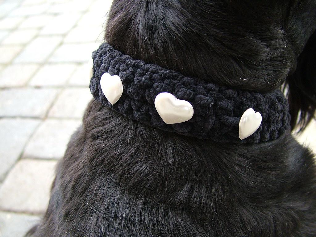 Crochet Dog Collar Victoria Bush Flickr