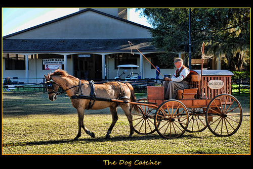 horse museum wagon carriage florida dogcatcher goldstaraward topazadjust