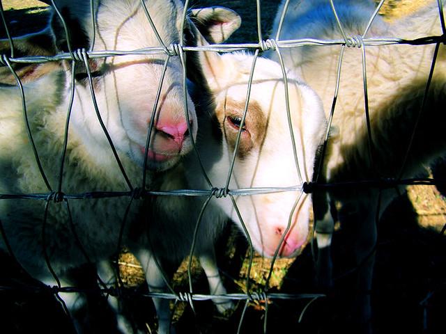 Animal farm definition meaning for Fabliau definition