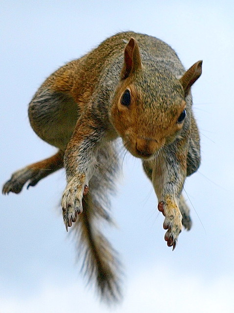 Incoming Squirrel! 2