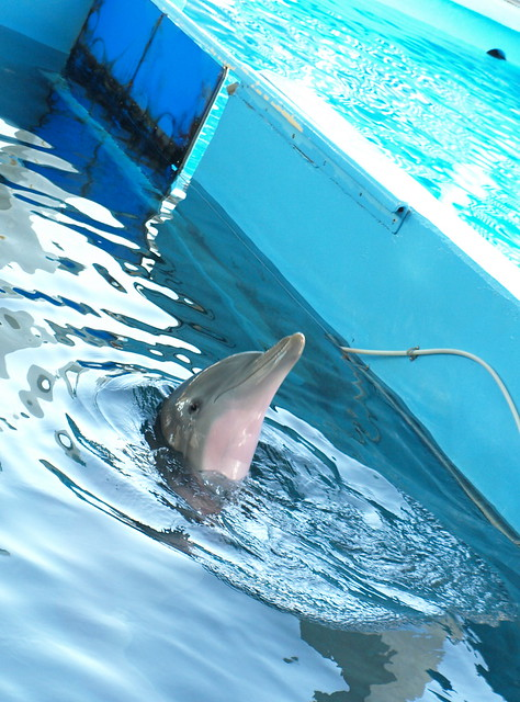 Image Result For Clearwater Aquarium Winter