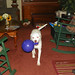 Small photo of Nala's new ball