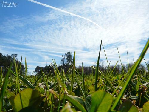 blue trees sky green grass clouds lumix contrail panasonic lowangle project365 sooc dmcfz18 panasonicdmcfz18 2009inphotos