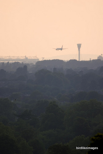 Airliner landing Heathrow Airport, view from Richmond Park London, UK