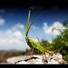 Grasshopper by Kaj Bjurman