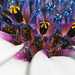 African Daisy Up Close by phoGARDENtog