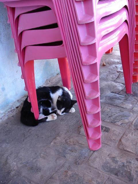 Ele estava enrolado no pé da cadeira do bar e só queria saber de dormir. Perto do Cabo Branco, João Pessoa, Paraíba. Abril de 2007