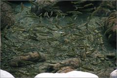 090217 山美部落達娜伊谷溪自然生態保育成果