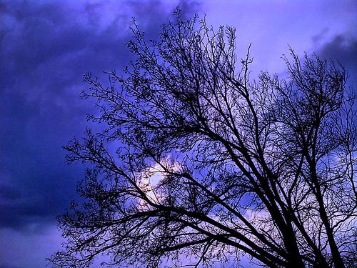 trees tree sunrise greece macedonia kilkis makedonia axioupolis vosplusbellesphotos