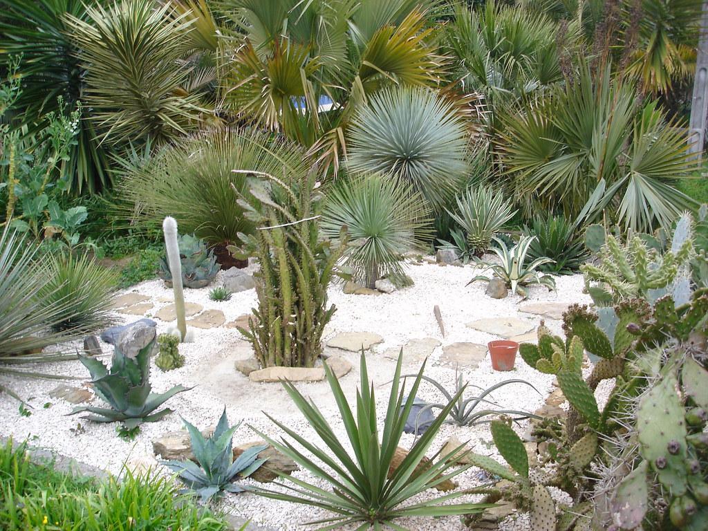 Fotos de jardines y plantas de sombra pgina 3 infojardin for Plantas y jardines