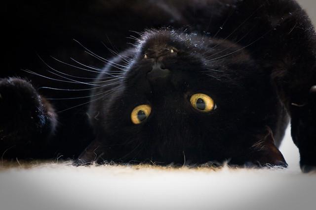 Bolka pretends to be a vampire bat