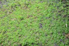 woodland(0.0), shrub(0.0), flower(0.0), grass(0.0), lawn(0.0), groundcover(0.0), leaf(1.0), soil(1.0), plant(1.0), herb(1.0), flora(1.0), green(1.0), meadow(1.0), vegetation(1.0), moss(1.0),