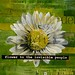 flower_pop_1