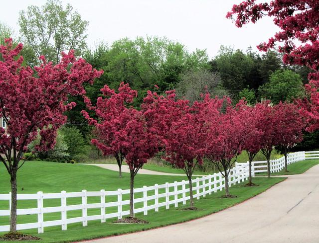 Flowering Trees Amp White Fence Flickr Photo Sharing