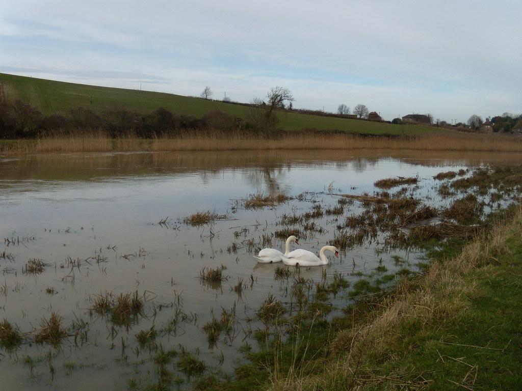 Swans Arundel Circular