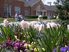 Hyacinths and Pansies
