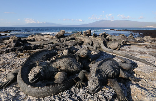 The Dragons of Galápagos
