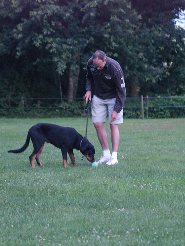 Tips For Training Your Dog The Right Way