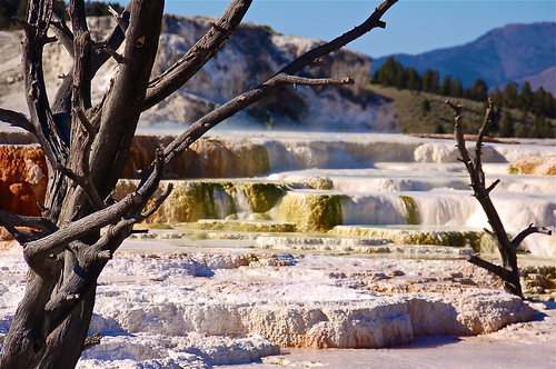 Mammoth Hot Springs, Yellowstone NP, USA