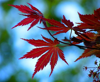 Bokeh Leaves in Red