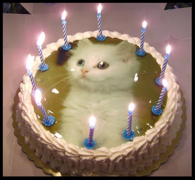 birthday cake for my cat  Flickr - Photo Sharing!