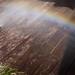 Small photo of Pressure Washing Rainbow Patrick Shusta
