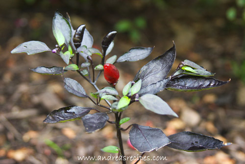 Royal Black peppers