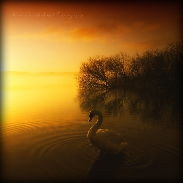On Golden Pond...