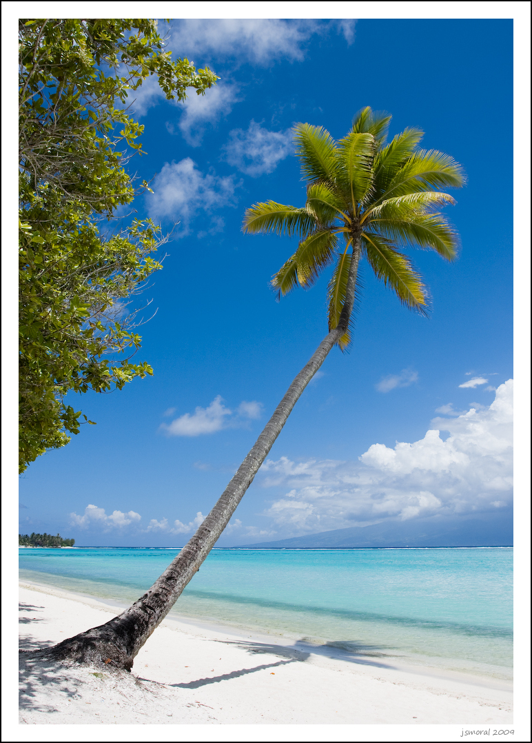 Palmera en una playa de Moorea