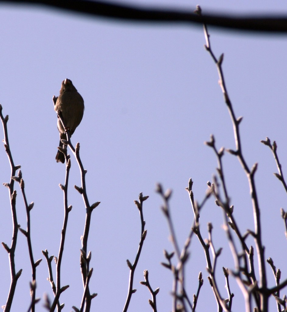 on sparrows and man a love hate relationship