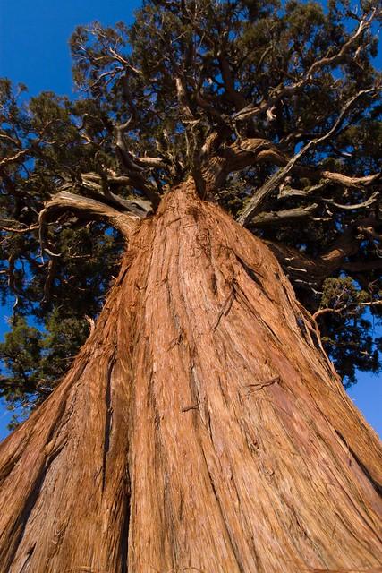 Tree Up Ass 88