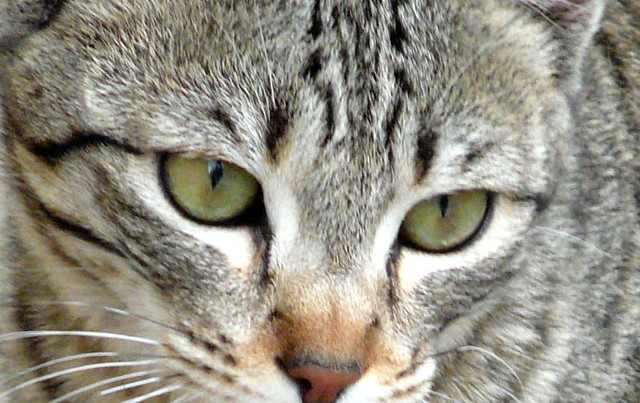 Look into my eyes!!!