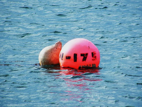 Buoy 175. Teignmouth, Devon