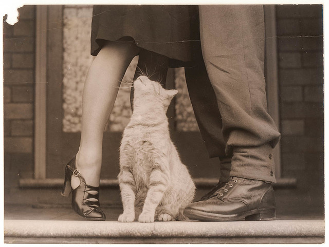 Soldier's goodbye & Bobbie the cat, Sydney, ca. 1939-ca. 1945 / by Sam Hood