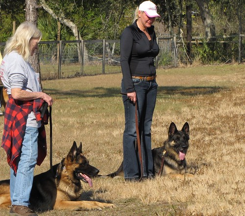 Tired Of Your Dog Ruling The Roost? Check Out These Simple Tips To Train Your Pet! 2