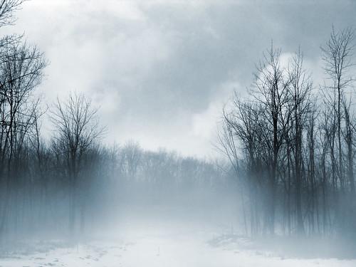 blue trees sky ny newyork cold home nature rain fog clouds dark landscape cool haze gloomy rainyday dreary creepy rainy blackforest scarymovie foest g9 genine powershotg9