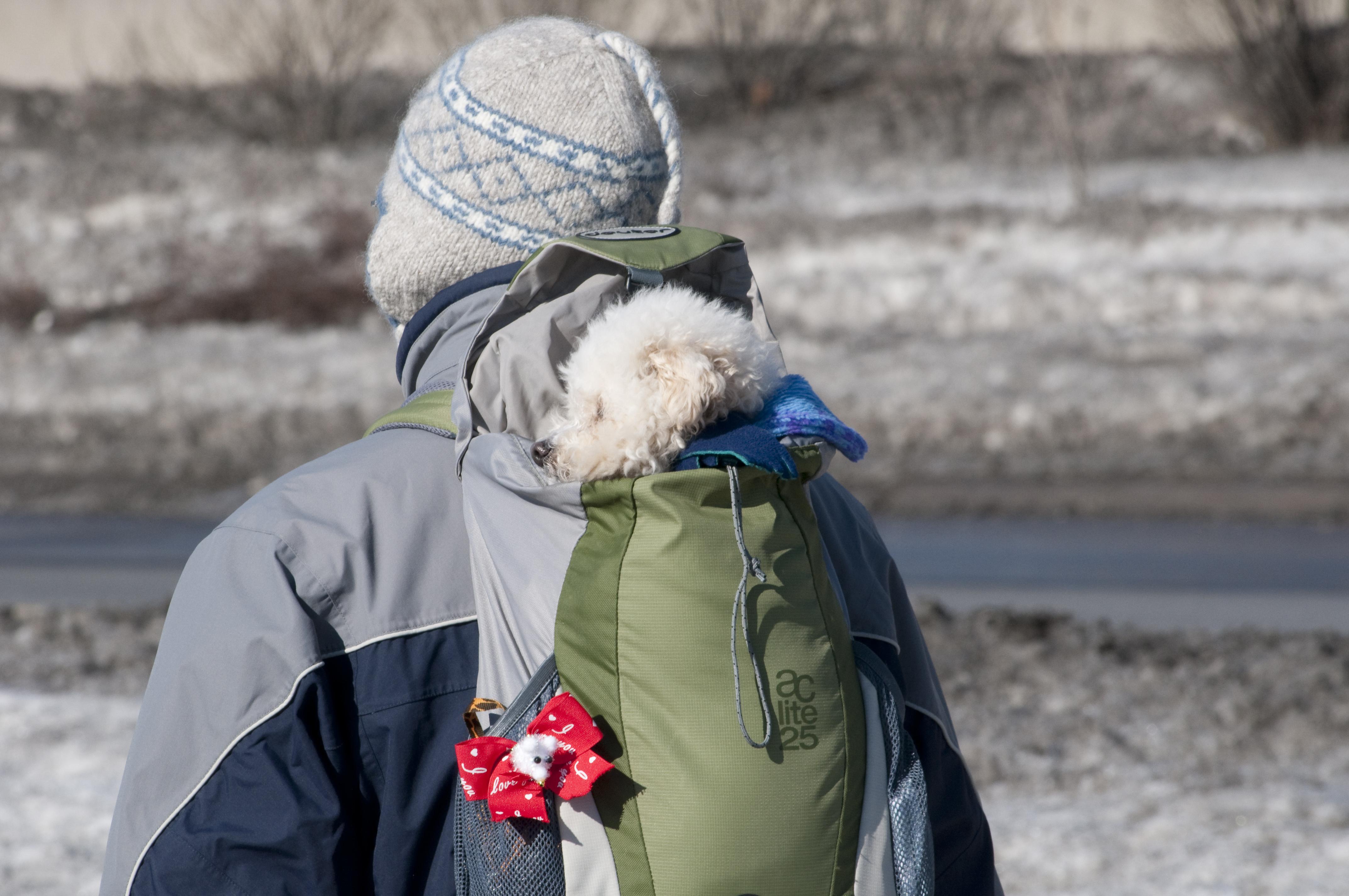 Ottawa Dog Rescue Ottawa On Canada