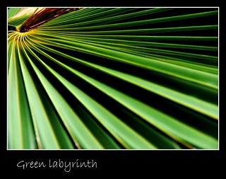 Green labyrinth/Laberinto verde