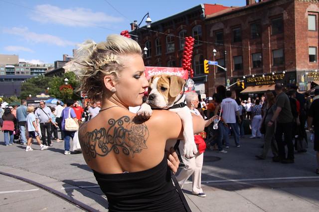 Beagle bulldog pup | Flickr - Photo Sharing!