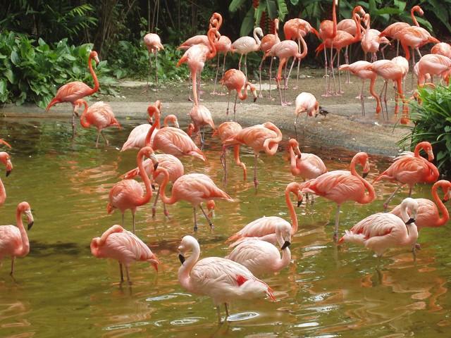 200907290946_Jurong-birdpark-flamingos