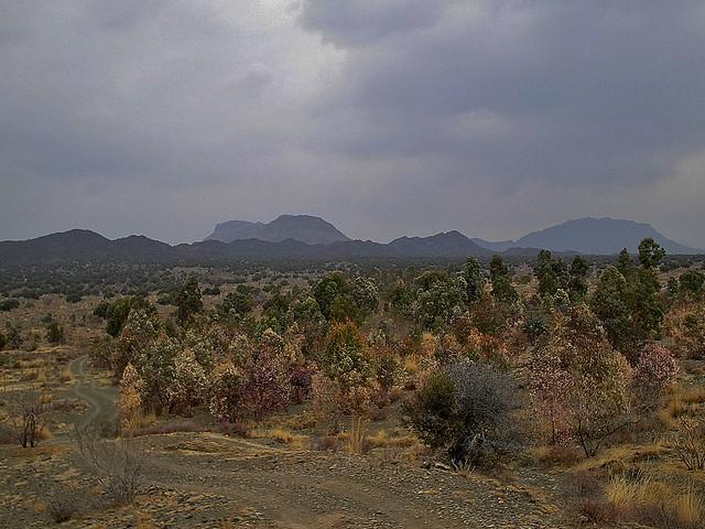 Kapip Wild Olive Forest in Zhob, Balochistan, Pakistan - February 2011