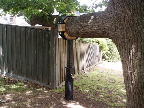 Tree brace