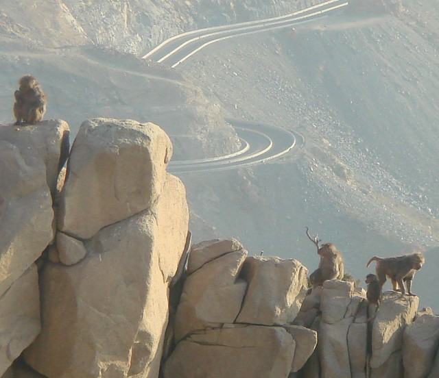 Al Hada Saudi Arabia  city pictures gallery : Saudi Arabia, Al Hada The Escarpment   Flickr Photo Sharing!