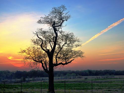 usa tree rural sunrise texas tx soe mywinners mywinner theunforgettablepictures betterthangood tup2 nearcanton fdsc0395
