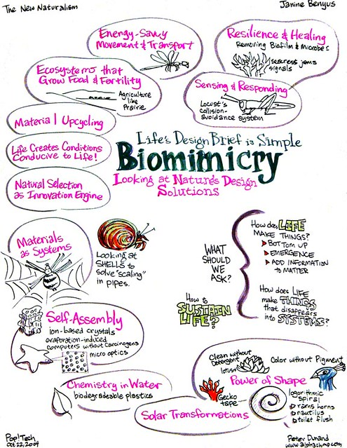 Biomimicry Looks To Which Discipline For Sustainable Design Ideas